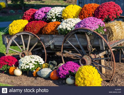 Capture the Bursting Colors